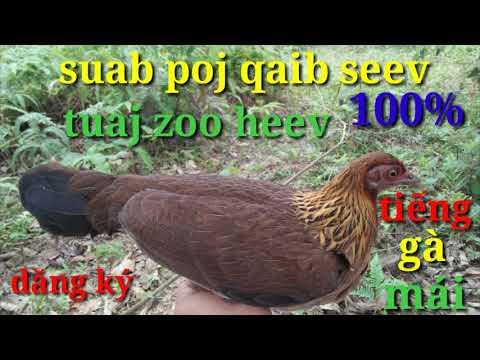 Suab Poj Qaib Seev Zoo Cuab Tuaj Zoo (tiếng Gà Mãi Keu)