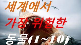 세계에서 가장 위험한 동물(Top 1~10)/The most dangerous animals in the world (L.n.S)