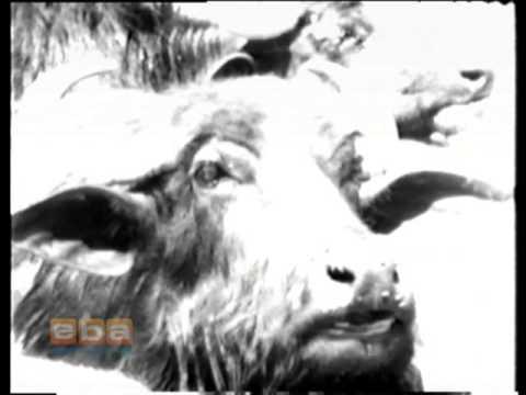Diyarbakırın 1976 Yılında Çekilmiş Tanıtım Filmi