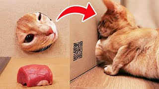 Increasing distance from hole to food!  When will cat stop ?