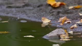 Осень и Ворона. Стихи Алены Полынь