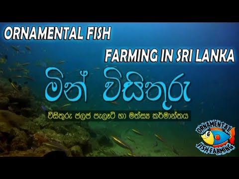 ORNAMENTAL FISH FARMING IN SRI LANKA (sinhala)