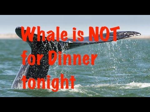UN Bans Japan Arctic Whaling   Political Economy in Effect