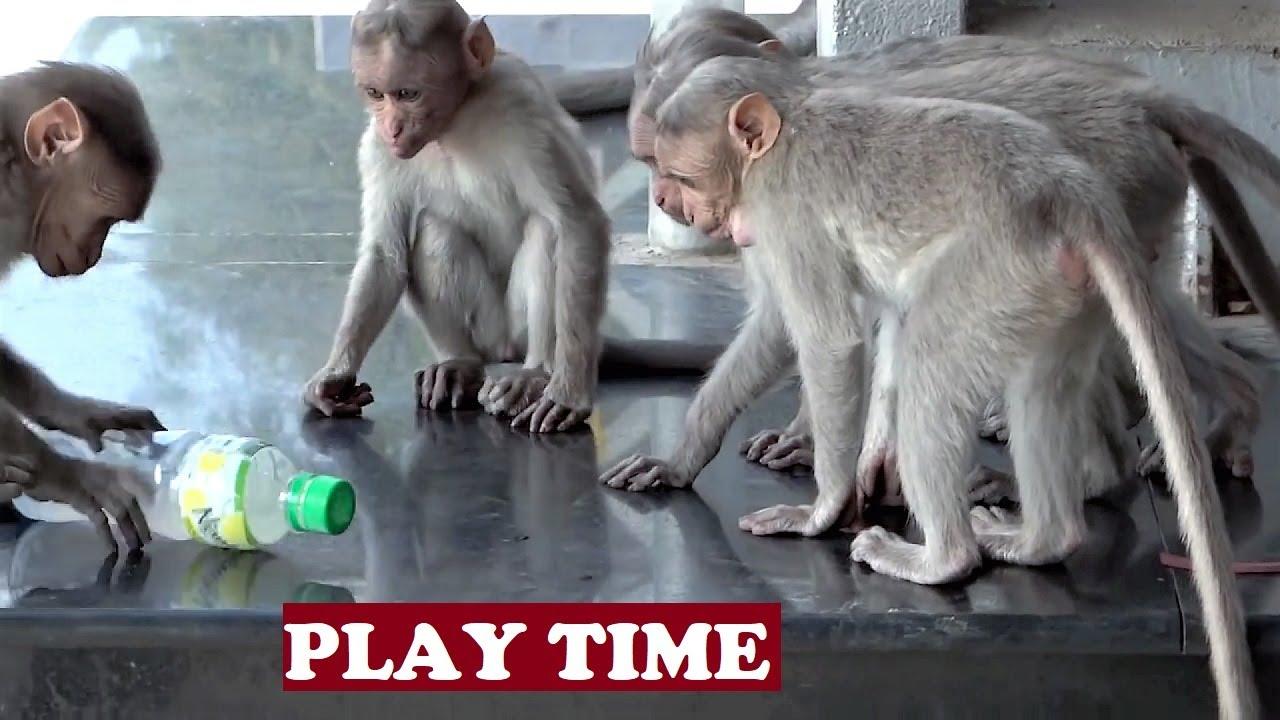 Naughty monkeys 49