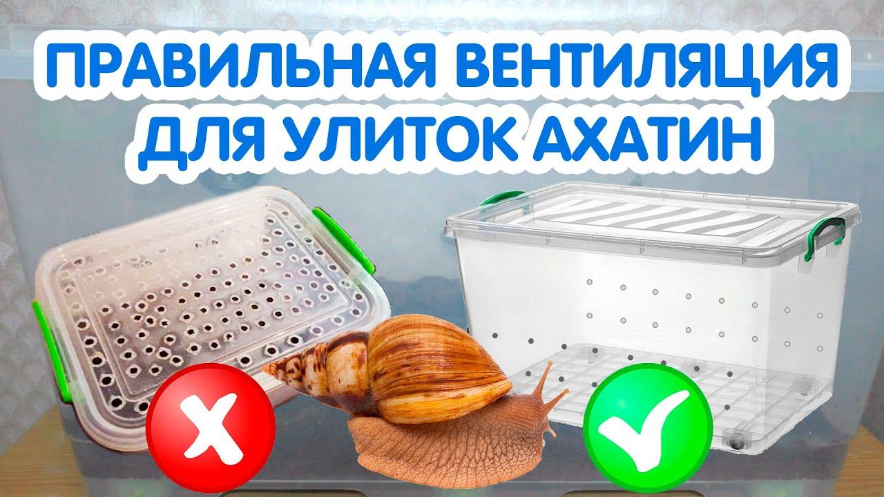Вентиляция для улиток ахатин. Как сделать вентиляцию в контейнере для улиток?