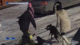 Владелец собаки, которая покусала двух школьников в Уфе, не желает приносить извинения