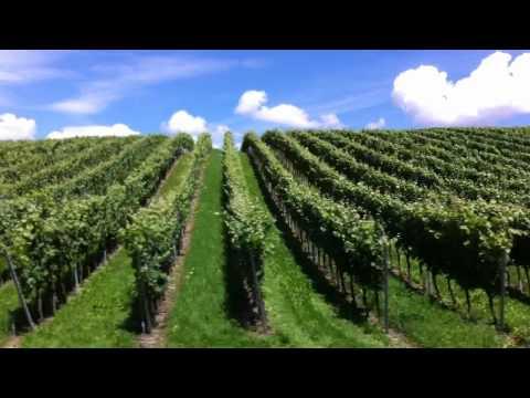 Vineyard outside of Meersburg, Germany