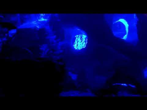 Blue Moon Fish Tank