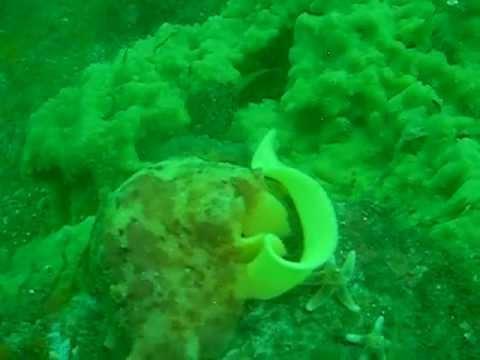 Diving the Menai Straits (cable dive)