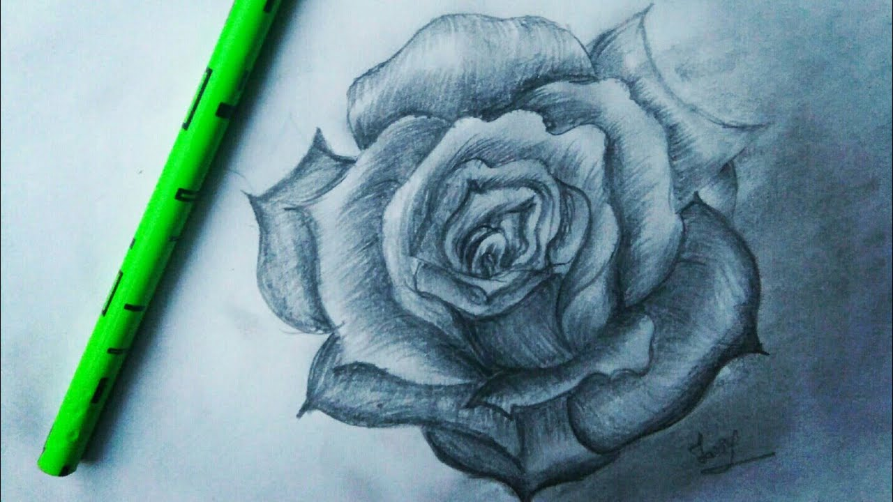 How to draw a 3d rose simply kids easy