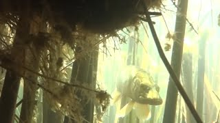 Подводная охота г. Челябинск / Spearfishing Chelyabinsk