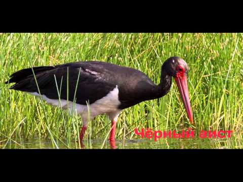 птицы красной книги