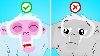 Learn the emotions with Superzoo! | Educational Videos