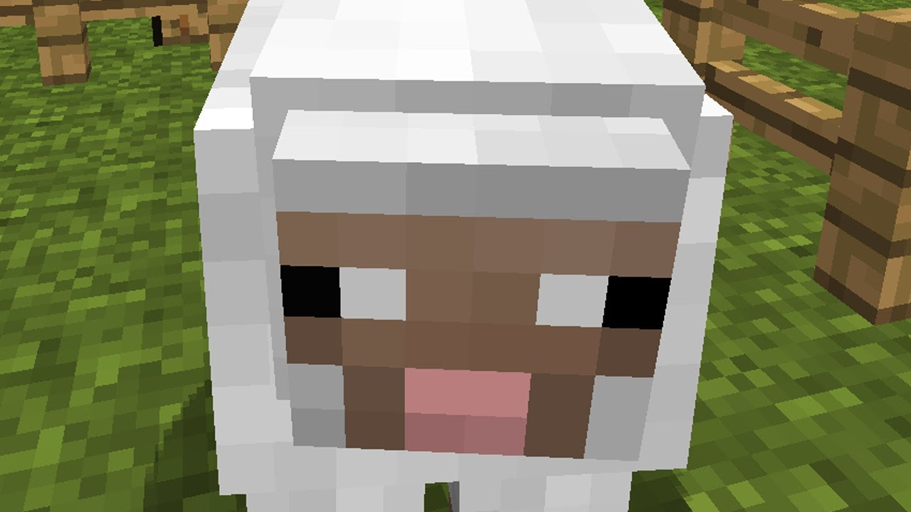 how to make feed sheep minecraft