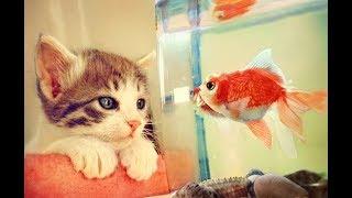 Imut Lucu Dan Menggemaskan. Begini Cara Kucing Mengexplorasi Hidupnya Dengan Lingkungan
