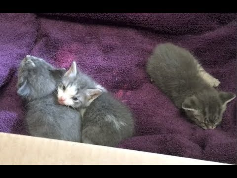 Kittens Hissing In A Box & Meet Mom And Her Irregular Crew - #8 - Blended Cat Family