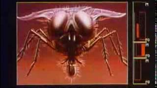 El hombre mosca pelicula