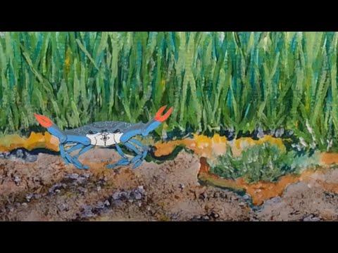 Blue Crab 101