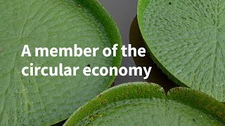 A Member of the Circular Economy