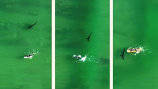 Close Encounter: Surfer Touches Great White Shark & Doesn't Realize It