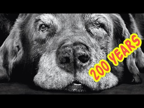 THE OLDEST DOGS In The World