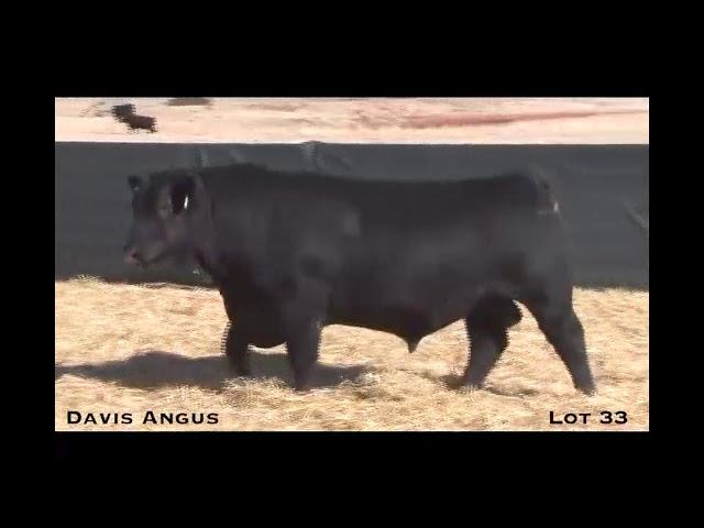 Davis Angus Lot 33