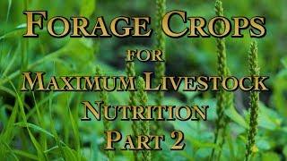 Forage Crops for Maximum Livestock Nutrition Part 2