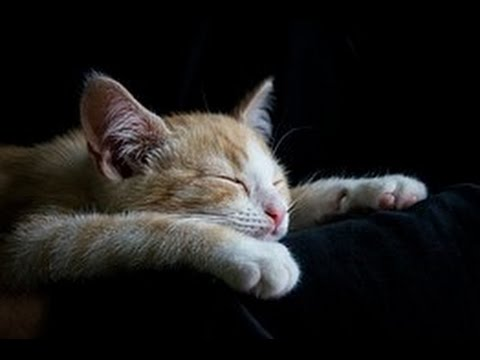 bruit blanc tres doux pour calmer chiens et chats sommeil d tente apaisement d stressant. Black Bedroom Furniture Sets. Home Design Ideas