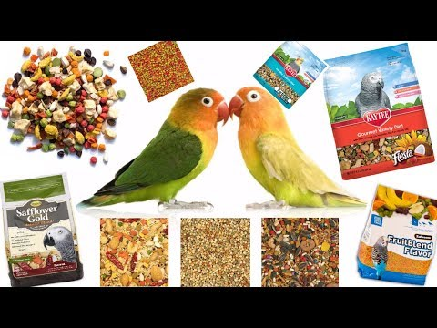 HUGE Parrot Food Haul! | Pellets, Seeds, & More! | What Should YOU Feed Your Bird!