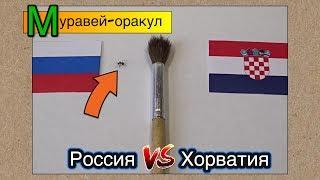 Муравей-оракул предсказывает итог матча Россия - Хорватия