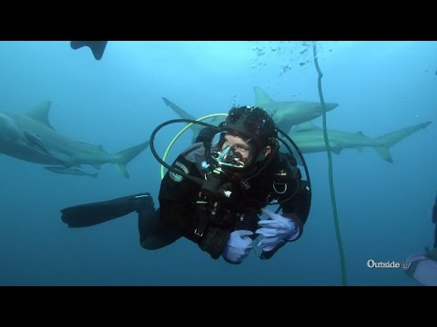 Shark Diving in South Africa  Descending
