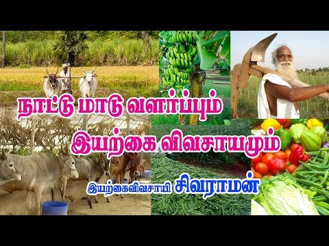 Natural farming & How to grow the cow? |  இயற்கைவிவசாயமும் ந