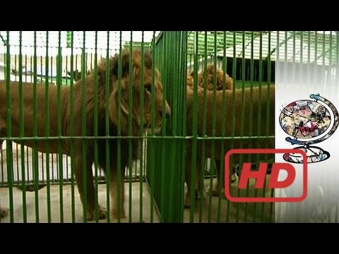 Popular Videos - Smuggling & Documentary Movies hd : Exotic Animal Smuggling is a Problem in Africa