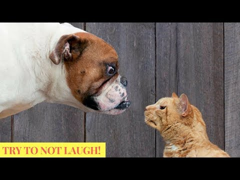 Cute Funny Dogs & Cat Videos Animals Compilation - July 2018