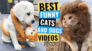Cats 😻 And Dogs 🐶 Funny Animals Compilation #8