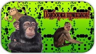 Подборка приколов с обезьянами!