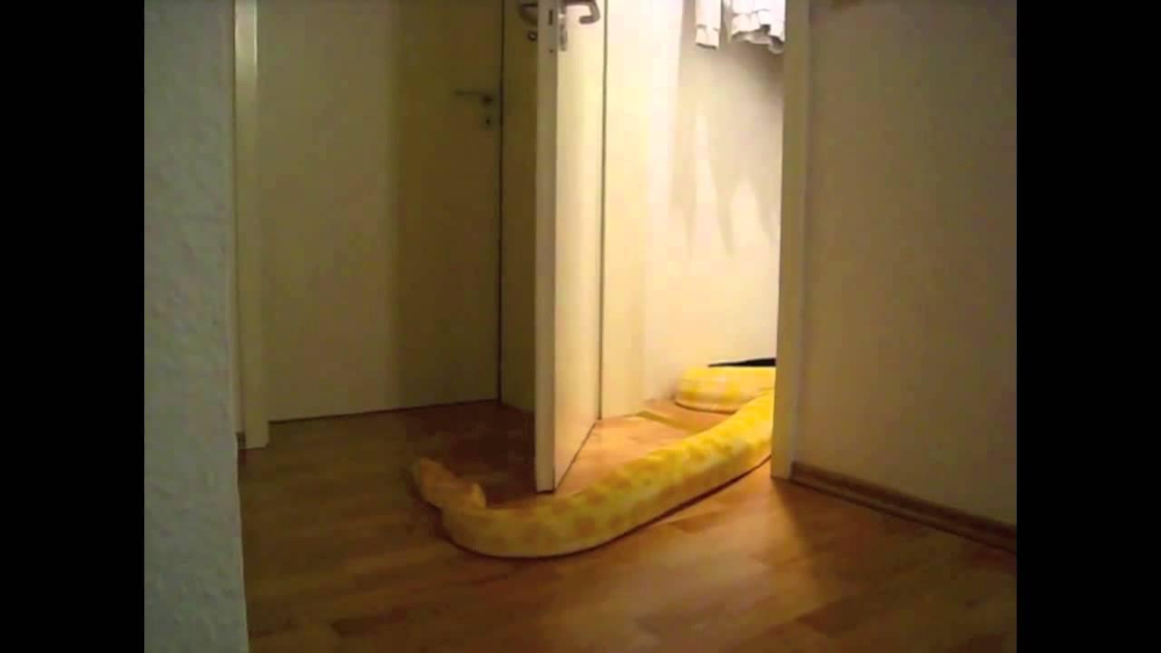 Snake Opens Door 20th Century Flute Edition Youtube