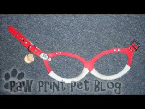 Kitsune the Papillon's Buddy Belt Review!