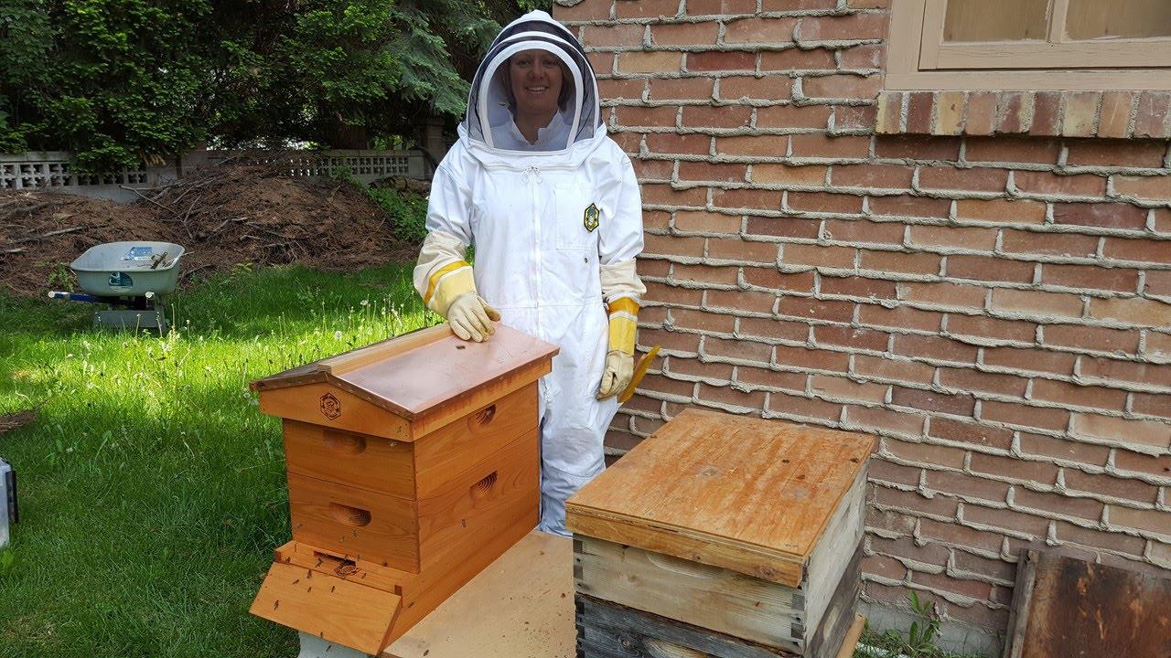 beginning beekeeping rachel u0027s first hive inspection