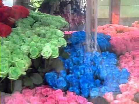 Розы зеленые и синие