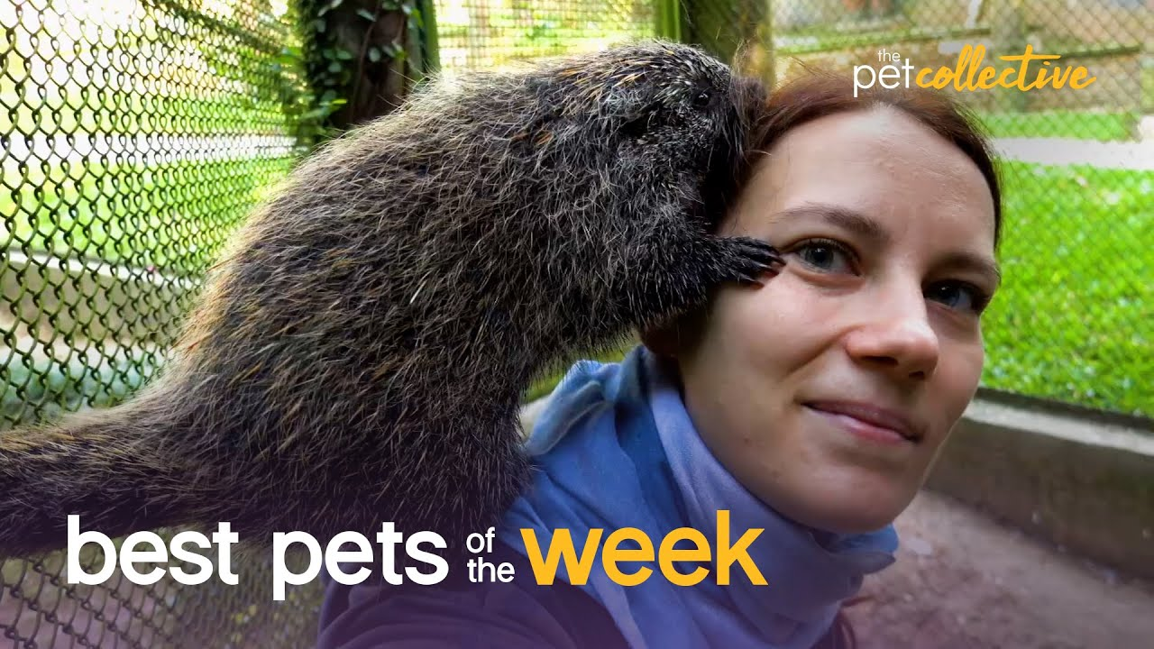 Caring Critters | Best Pets of the Week