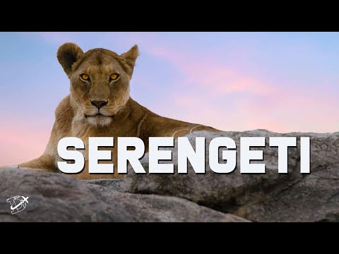 Africa The Serengeti - Wildlife Safari in Tanzania | The Planet D
