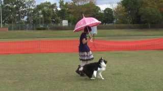 DOG GYM Shake! 第2回コンペティション トレーナーによるドッグダンスデ...