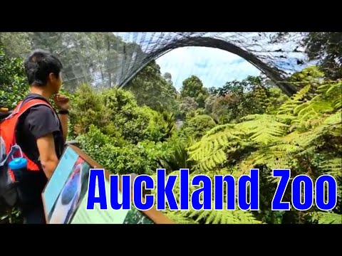 Auckland Zoo, New Zealand, Long version
