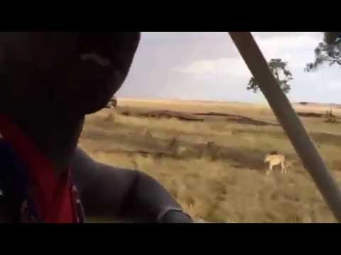 Lions of the Masai Mara - Local Maasai safari guide Moses introduces us to the Marsh Pride of Lions