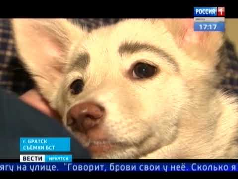 В Братске бездомная собака с «бровями» стала звездой Инстаграма и нашла нового хозяина