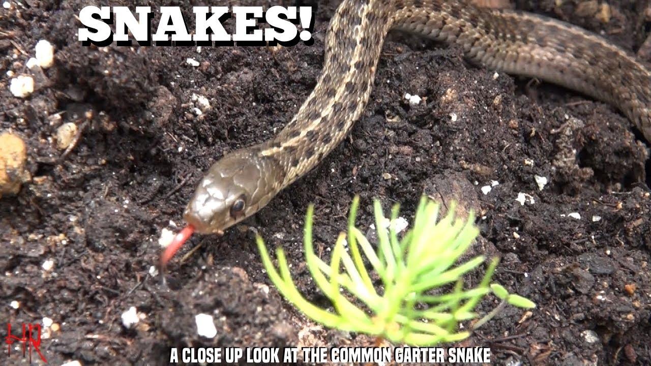 boa slange arter