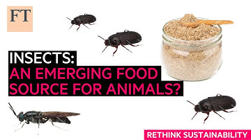 Insects: an emerging protein source for animal feed   Rethink Sustainability