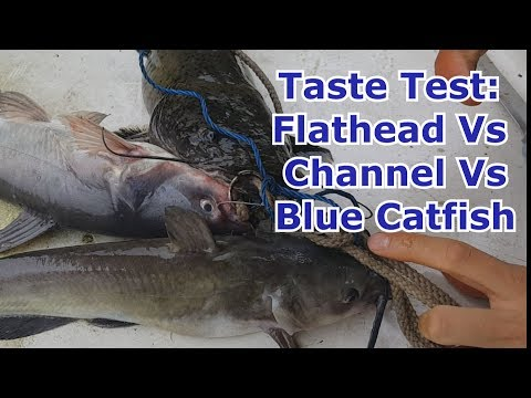 Catch And Cook: Channel Vs Flathead Vs Blue Catfish