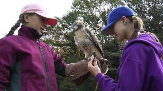 Falconry Training